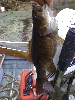 2lb. Small Mouth Bass